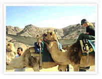 Camel Safari, Nubra Valley - Ladakh
