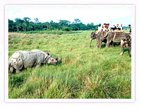 Rhinoceros, Royal Chitwan National Park